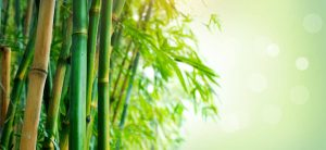 bamboo | My Power Life