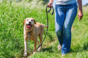 walking dog for fitness | My Power Life
