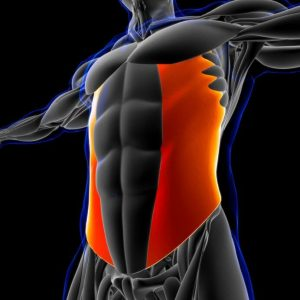 oblique muscles | My Power Life