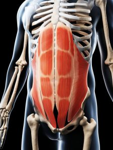 abdominal muscles | My Power Life